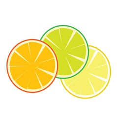 fruit orange vector image