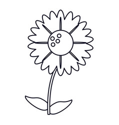 Gerbera flower natural outline vector