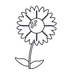 gerbera flower natural outline vector image