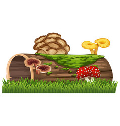 Log with mushrooms growing on it vector
