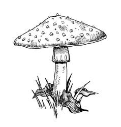 Mushroom amanita growing in forest wildlife vector
