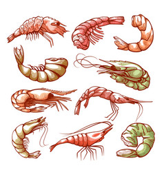 Shrimp hand drawn sea and seafood symbol vector