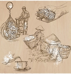 Tea Processing Agriculture An hand drawn vector
