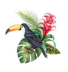 watercolor composition with toucan exotic vector image