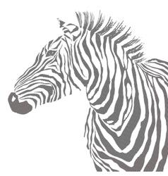 Animal of black zebra striped vector image