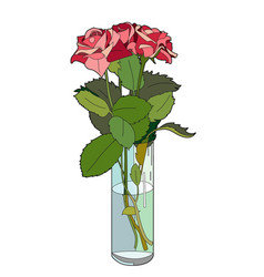 Three roses in a vase vector
