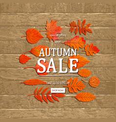 autumn sale banner concept vector image