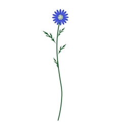 Blue Daisy Blossom on A White Background vector