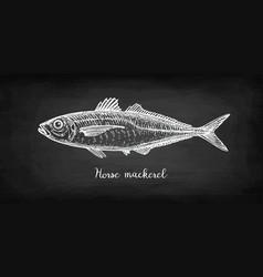 Chalk sketch of horse mackerel vector