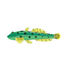 goby aquarium fish isolated on white graphic vector image