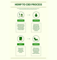 Hemp to cbd process vertical infographic vector