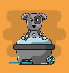 pet grooming dog bucket foam brush ball toy vector image
