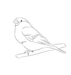 sparrow lines vector image