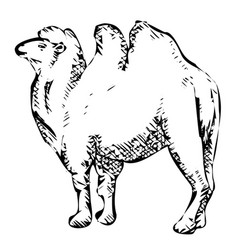 Stylized bactrian camel vector