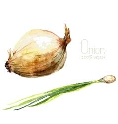 Watercolor onion vector image vector image