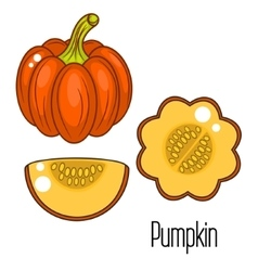 Acorn squash cartoon vector image