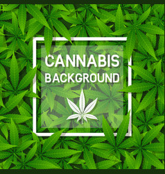 green cannabis herb leaf background with frame vector image