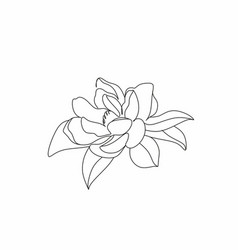 Magnolia line drawing flower line art botanical vector