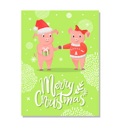merry christmas postcard pigs symbol of new year vector image