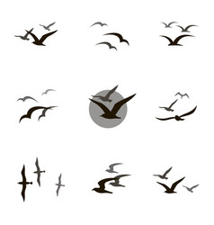 Set of seagulls vector