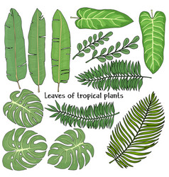 set with leaves tropical plants colorful vector image