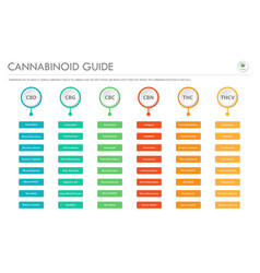 cannabinoid guide horizontal business infographic vector image