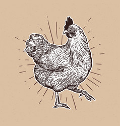 chicken hand drawn chicken meat and eggs vintage vector image