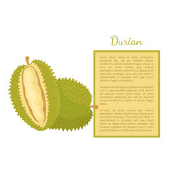 Durian exotic juicy fruit unusual flavour poster vector