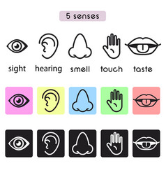 five human senses sight hearing smell touch and vector image