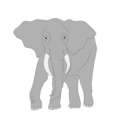 gray elephant walks white background vector image