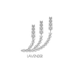 lavender outline icon vector image
