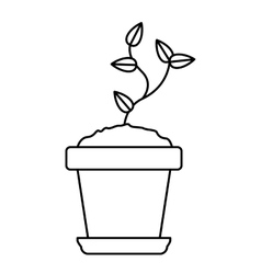 Plant inside pot design vector image
