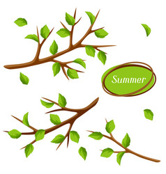 Summer set with branches of tree and green leaves vector