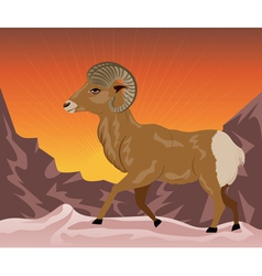 Wild ram in the mountains vector