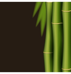 Bamboo design template vector