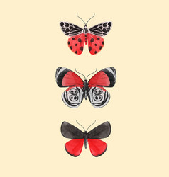 Beautiful watercolor three red butterfly vector