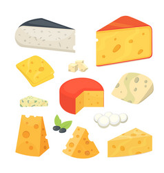 cheese types modern flat style realistic vector image
