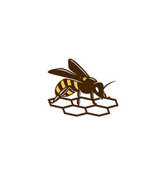 honey-bee-logo-template vector image