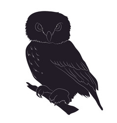 owl stands drawing silhouette vector image