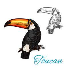Toucan tropical bird sitting on branch sketch vector