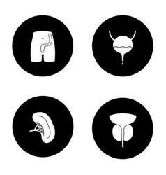 Internal organs glyph icons set vector