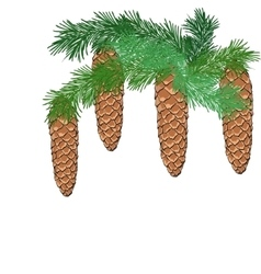 Spruce branch with cones vector