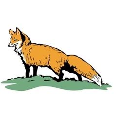 Fox sketch Color hand drawn vector image