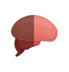 brain organ human healthy design graphic vector image vector image