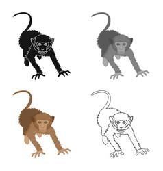 Monkey wild animal of the jungle monkey mammal vector