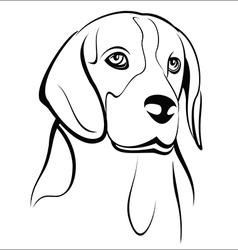 Beagle vector