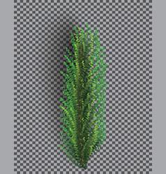 fir branch christmas tree pine sprig on vector image