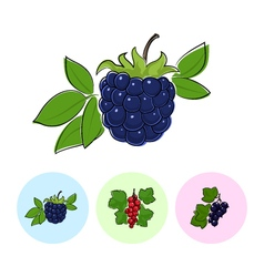 Fruit Icons Blackberry Redcurrant Blackcurrant vector image