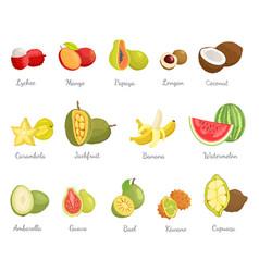 Lychee and mango coconut banana fruits set vector