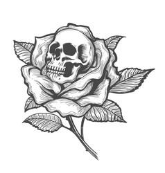 Skull inside a rose flower vector